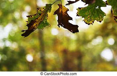 Fall Changes - Process of autumn changes, both color and...