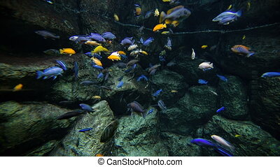 Colored reef fishes - Colored fishes and plants in aquarium