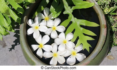 Beautiful White Flowers Group Decorated On Water Bowl
