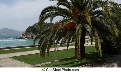 Palm tree top closeup on sea coast background - Palm tree...