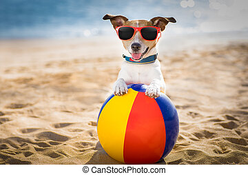 dog at the beach and ocean with plastic ball - jack russel...