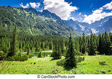 Wonderful small pond in the Tatras in summer, Poland, Europe