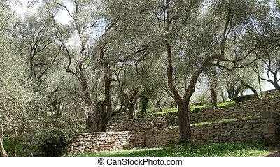 Olive groves and gardens in Montenegro.