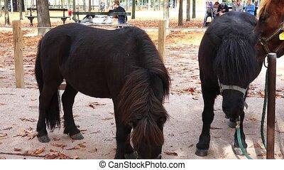 Pony. Little horse. 4K. - Pony. Little horse. Shot in 4K...