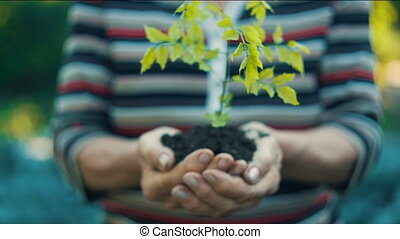 Woman holding plant in a hands - Moman's hands holding green...