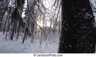 Winter Forest. Trees under snow. 4K. - Winter Forest. Trees...
