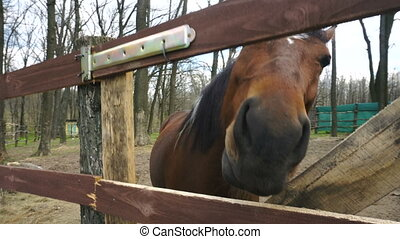 the horse in the stall looks into the camera outdoors