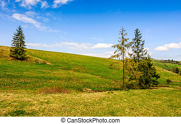 pine forest in summer landscape - Pile forest at the foot of...