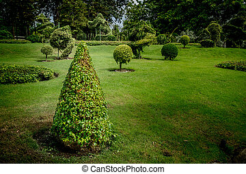 Cone trimmed bush with green lawn