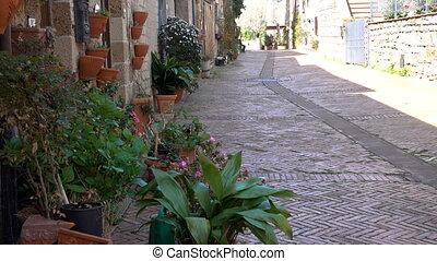 flowers on an italian street