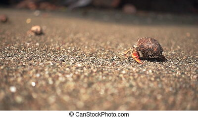 Hermit crab walking away at the beach in slow motion - Super...
