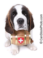 A Saint Bernard puppy with rescue barrel around the neck -...