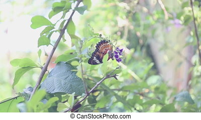 Black butterfly eating pollen flower on tree in the garden