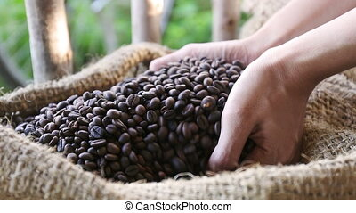 woman hands holding coffee grains - Inside close up of woman...