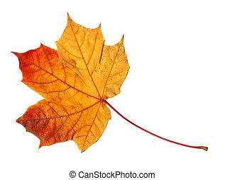 Yellow orange leaf on white
