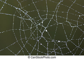 dewy cobweb - Close-up of the dewy spiders web