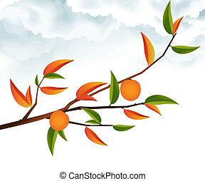 árbol, rama