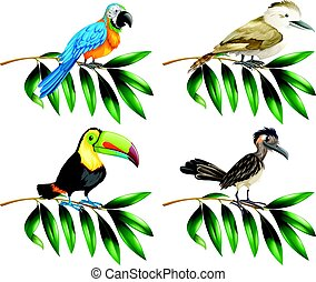 Four types of wild birds on branch illustration