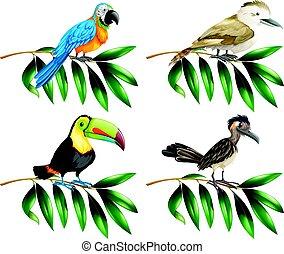 Four types of wild birds on branch illustration