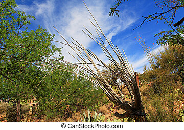 Wooden Ribs of a Dead Saguaro Cactus - Wooden dried out...