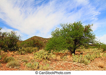 Mountain View in Colossal Cave Mountain Park - Scenic...