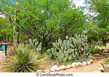 Butterfly Garden on La Posta Quemada Ranch in Colossal Cave...