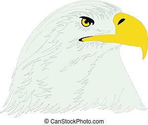 eagle head illustration2
