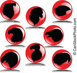 eagle head illustration1