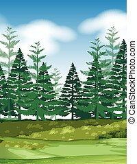 Forest scene with pine trees illustration