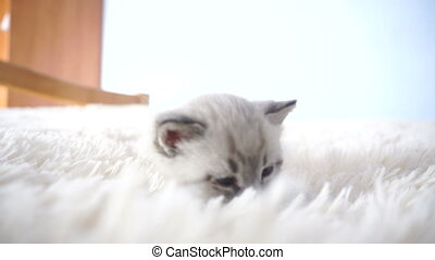 little kitten on the fluffy beds close up