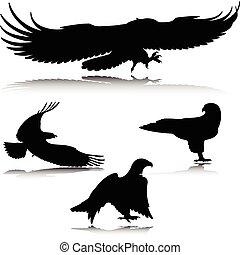 aigle, action, vecteur, silhouettes