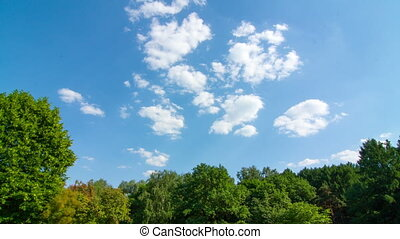 Floating clouds above trees