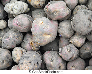 Peruvian Potatoes background - Peruvian Potatoes in the...