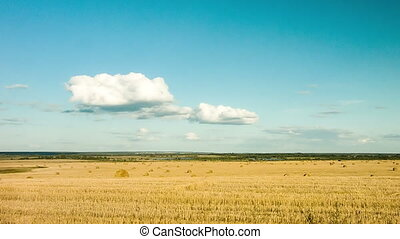 The beauty of nature, a field of wheat, hay, clouds, timelapse