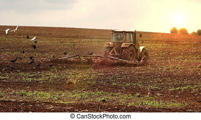 Tractor cultivates the soil on sunset, beauty rural scene