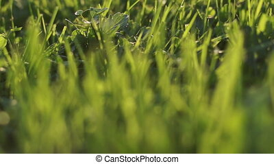 A little adventure throuth the green grass, animal pov