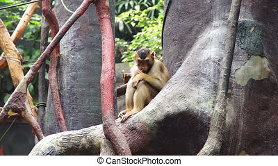 Little monkey sitting on a tree and chews food