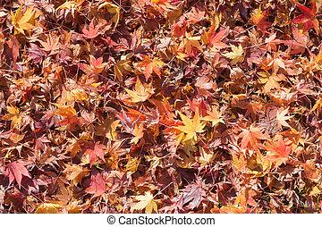 Fallen maple leaf on ground late Autumn season
