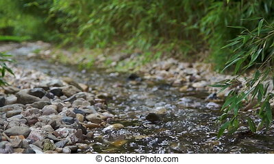 Tranquil scene with a creek stream close up