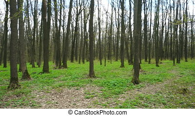 forest with trees without foliage