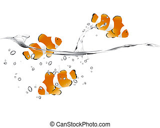 Clown Fish - three clown fish swimming and jumping free.