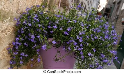 Blue flowers in a clay pot on the wall. Flowers and trees in...