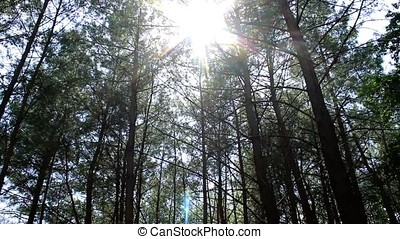 Great sunshine and lens flare in the forest