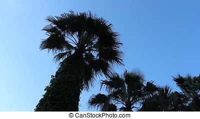 Palm trees swaying in the wind