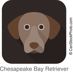 Chesapeake bay retriever dog face flat icon, dog series