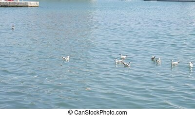 A flock of seagulls floating on the water