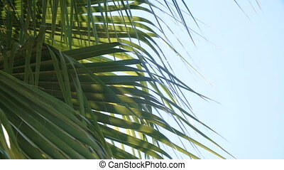 Green and bright palm leaves in wind against blue sky -...
