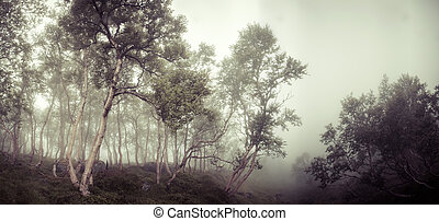 dark scary deciduous tree forest - dark scary wet deciduous...