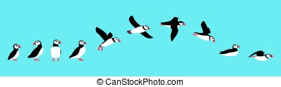 flying sequence of puffin, multiple exposure, vector...