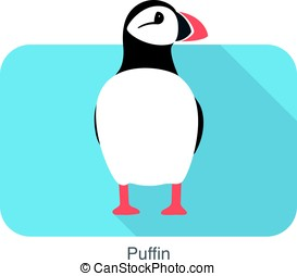Iceland bird, flat cute puffin, vector illusration - Iceland...